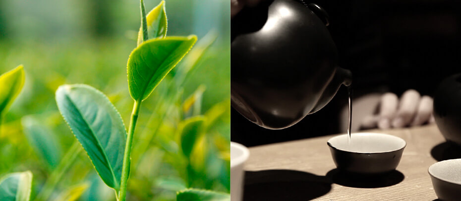 TeaParty_930x405_02